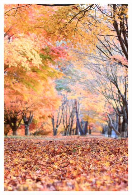 2014-11-16-13.jpg