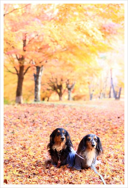 2014-11-16-15.jpg