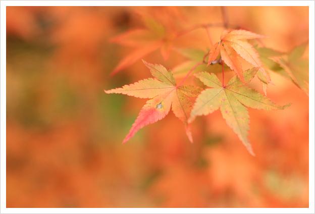 2014-11-16-19.jpg