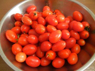 ミニトマトの大収穫