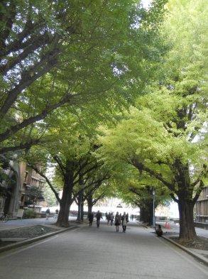 正門通りから安田講堂を望む
