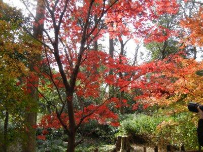 深大寺界隈の紅葉