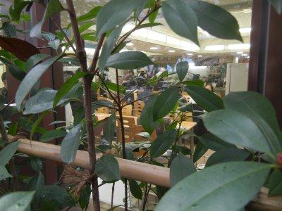 社員食堂窓からの眺め