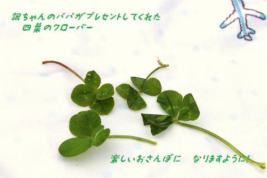 IMG_8143y.jpg