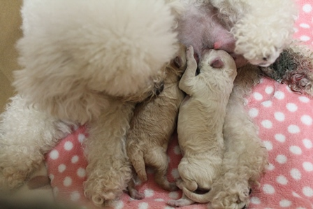 moka最後の出産1