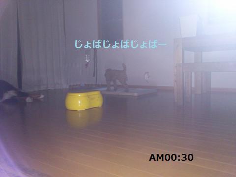 201308083.jpg
