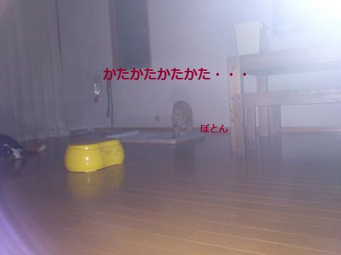 201308084.jpg