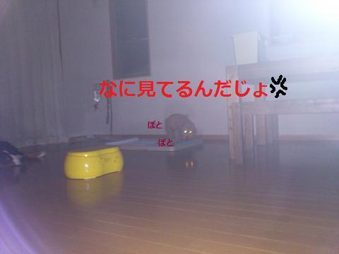 201308085.jpg