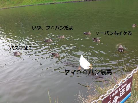 2013111313.jpg