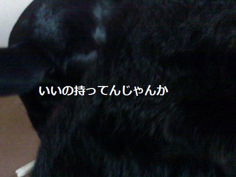 201311159.jpg