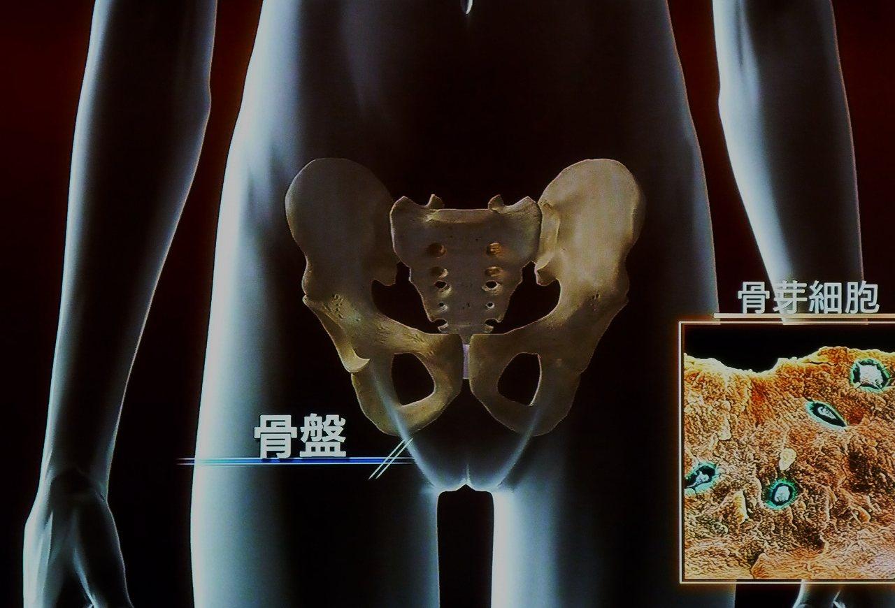 NHKスペシャル「人体ミクロの大冒険」で放送されたパイパン状態の女性器