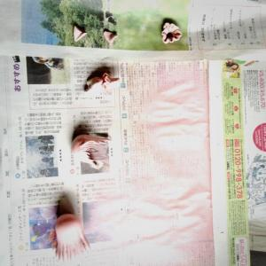ふゅぎゅ改造4
