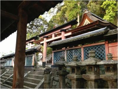 奈良木津川250503_84