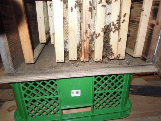 蜜蜂底板の取り換え H2611