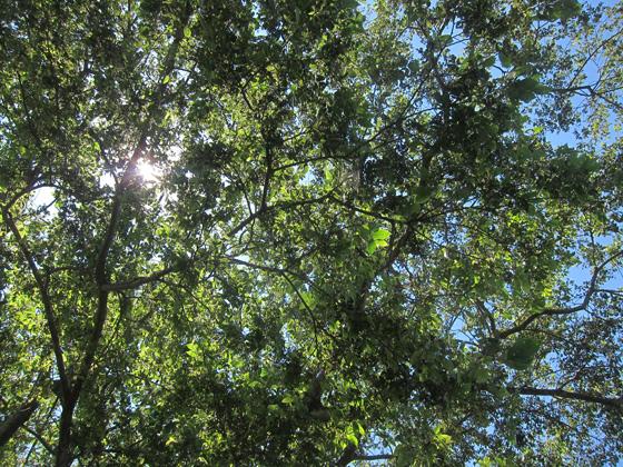 sky072002.jpg