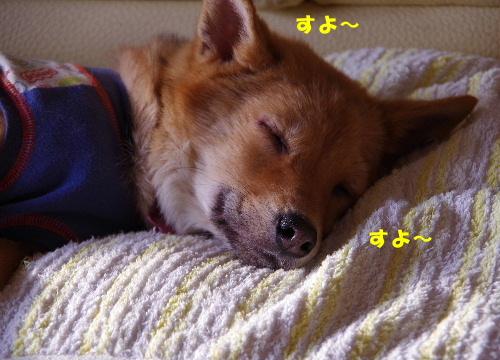 良く寝る子3