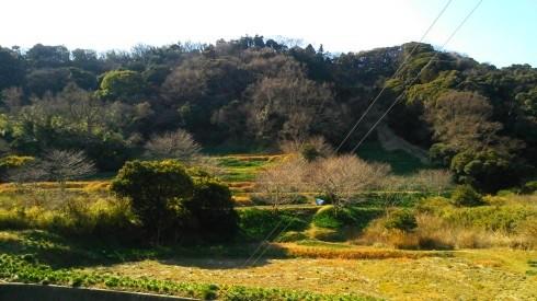 H26.水仙ロード1-18