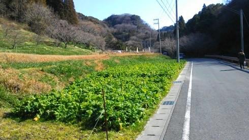 H26.水仙ロード1-28
