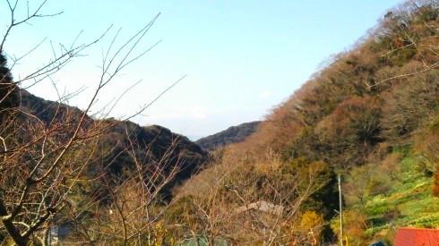 H26.水仙ロード2-8