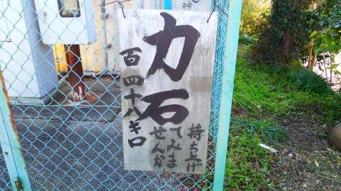 H26.水仙ロード2-16