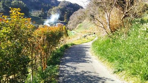 H26.水仙ロード2-21