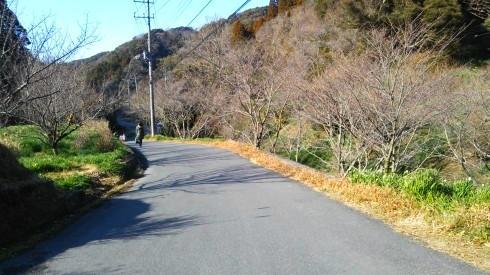 H26.水仙ロード2-23