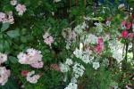 DSC_0065_convert_20130529103213.jpg
