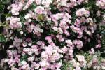 DSC_0066_convert_20130529103236.jpg