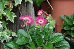 DSC_0101_convert_20130424194349.jpg