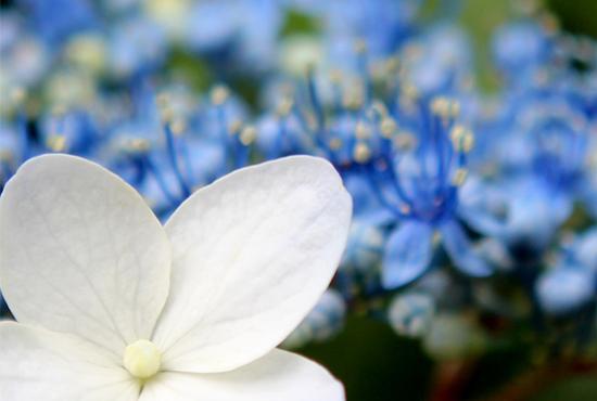 庭の花2013 110