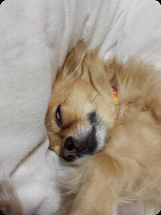 チョロ太爆睡2