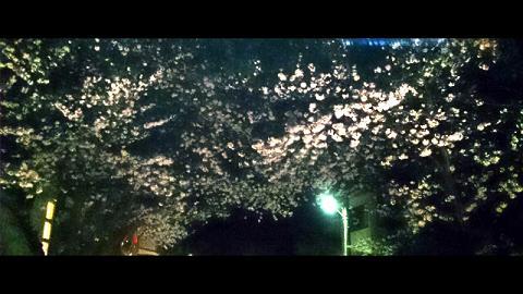 DSC055220130326225533611夜桜