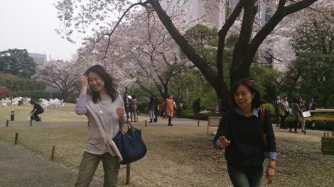 DSC0656130328桜ふぶきのそよ風