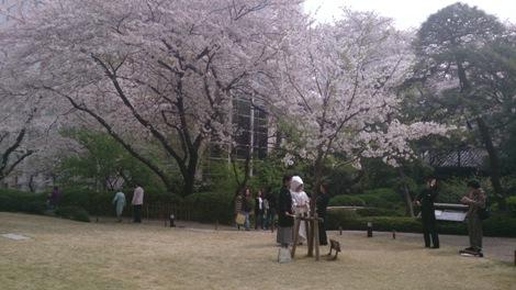 20130329 131409桜の下で