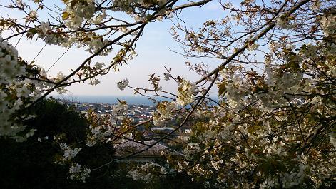 DSC0699130401葉桜と海
