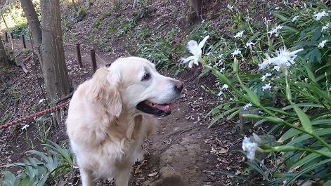 DSC_0937130413花とジュティー