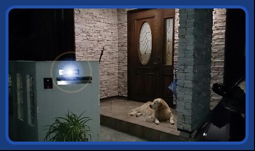 PicsArt_1373018742158番犬ジュティー