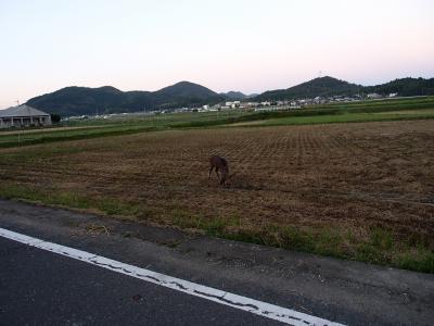 莠ャ荳ケ豕「+001_convert_20131001194651
