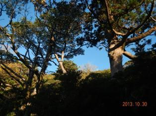巨樹が林立