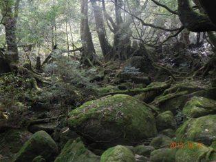 「もののけ姫」のモチーフになった苔の森