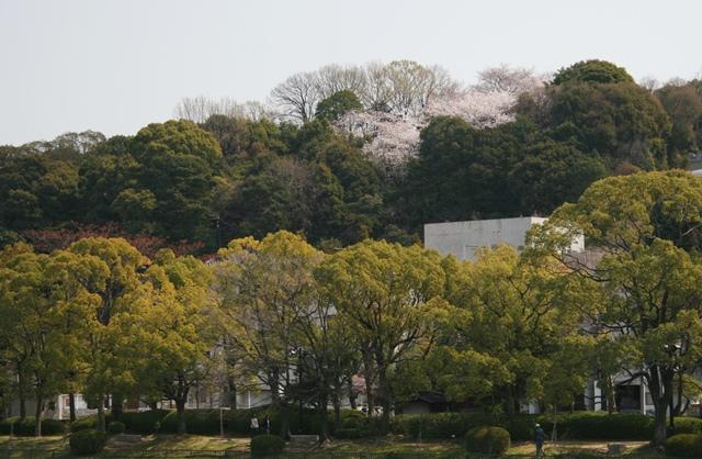 IMG_4938 比治山に桜が W