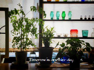 リビングの観葉植物 ~冬~