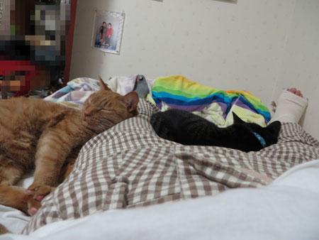 ネコに寄り添われる 暑いつーの!