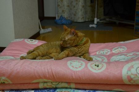 メンメ 布団の上で寝る
