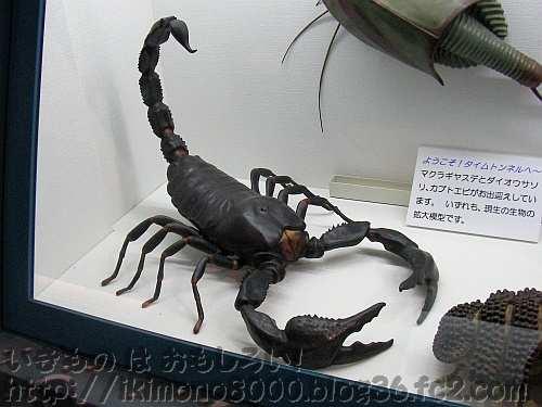 ダイオウサソリの拡大模型 橿原市昆虫館常設展示(2011年)