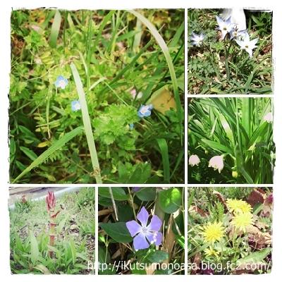 散歩道に咲く花々