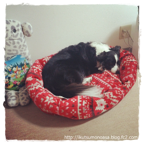 ノアは小さいベッドよりも・・・