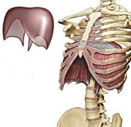 diaphragm1.jpg