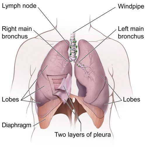 diaphragm2.jpg