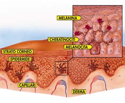 melanina-e-cheratinociti.jpeg